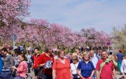 Mandelblütenfest Gimmeldingen 2013
